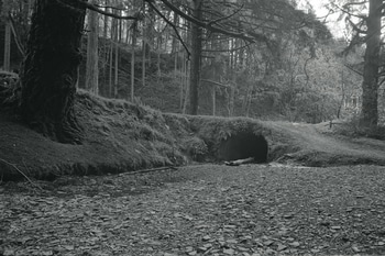 Tunnel under forest track with river pebbles in foreground.