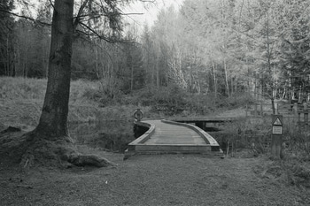 Curved plank bridge over pond in conifer forest with tree in foreground.