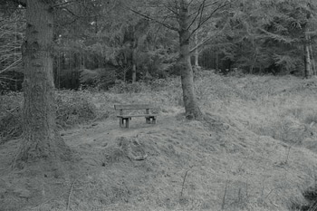 Bench between two conifers.