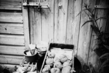 Sprouting potatoes and gardening implements on outdoor table.